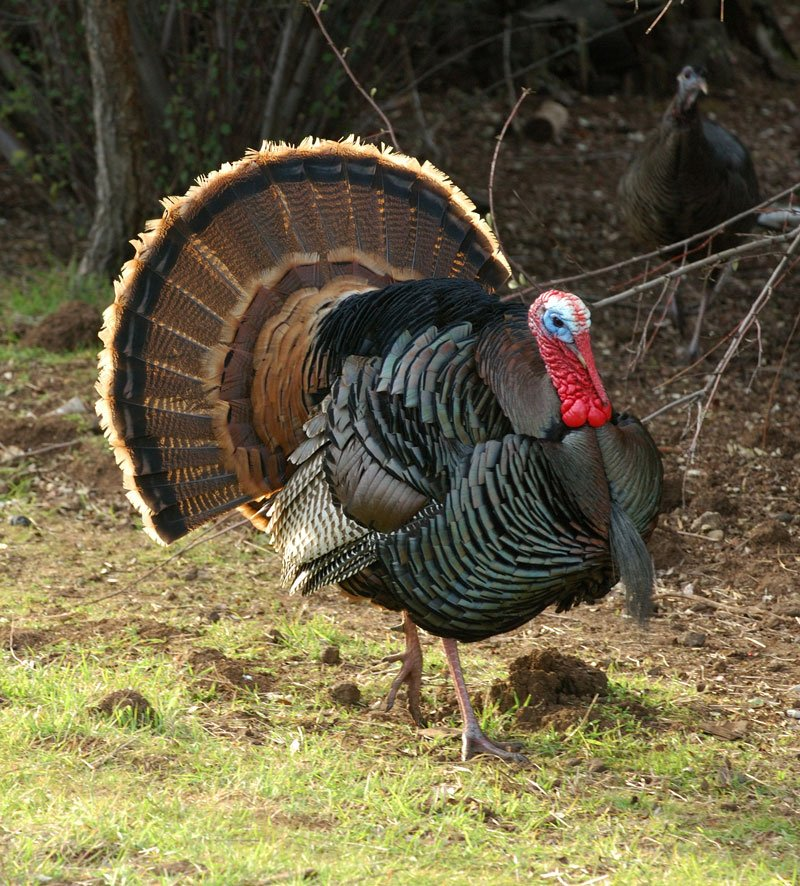 Thanksgiving Fun Facts to Share at Your Holiday Celebration
