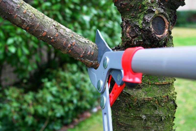man trimming tree, tree damage to your property