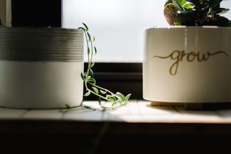 plants in the windowsill, best indoor plants for your home